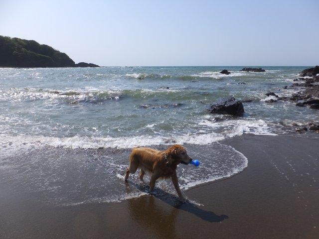 西番神海水浴場 2018.5.5 108
