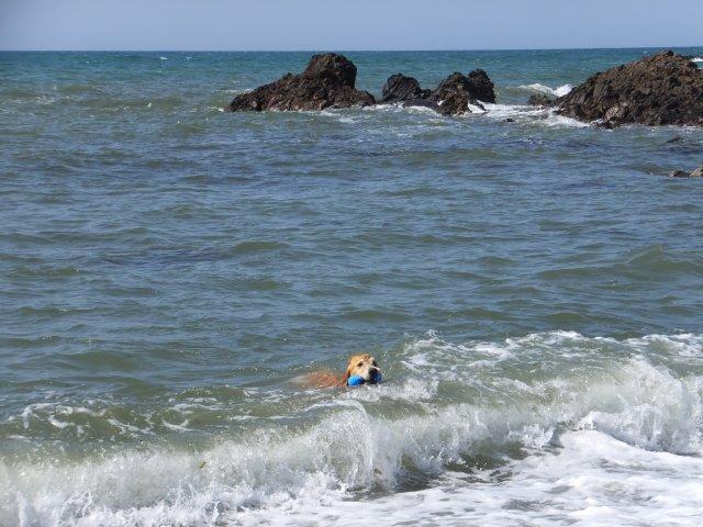 西番神海水浴場 2018.5.5 117