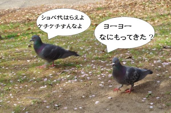 箱崎公園の鳩