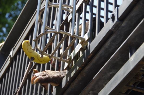 福岡市動物園 マレーグマ マチ♀