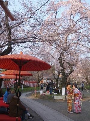 平野神社の桜1803