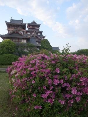 桃山城のツツジ1805