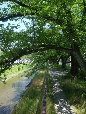 天神川散歩道1805