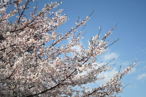 180407 桜の空