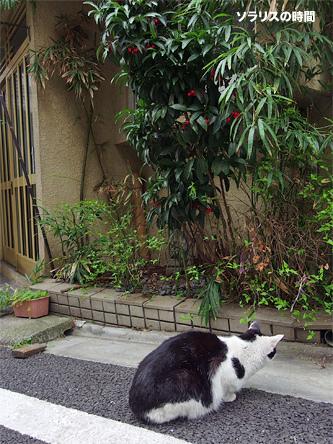 987-124-0東京風景21