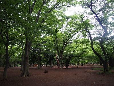 yoyogi-street35.jpg