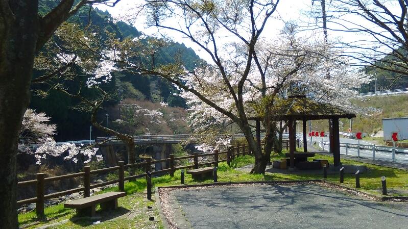0331桜-1