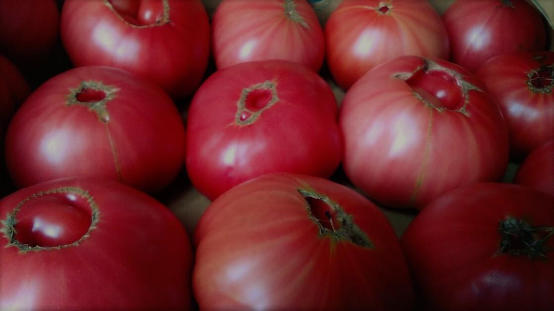 0428トマト