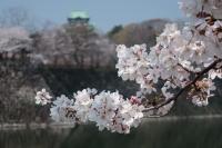 BL180328花見ライド3IMG_0586