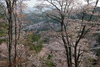 BL180402吉野山2-9IMG_0706
