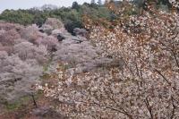 BL180402吉野山3-6IMGP1869