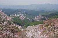 BL180402吉野山4-8IMGP1947