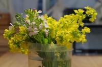 BL180402菜の花IMG_2442