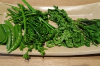BL180415山菜料理1IMG_2844