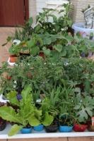 BL180506野菜苗買い出し1IMG_1079