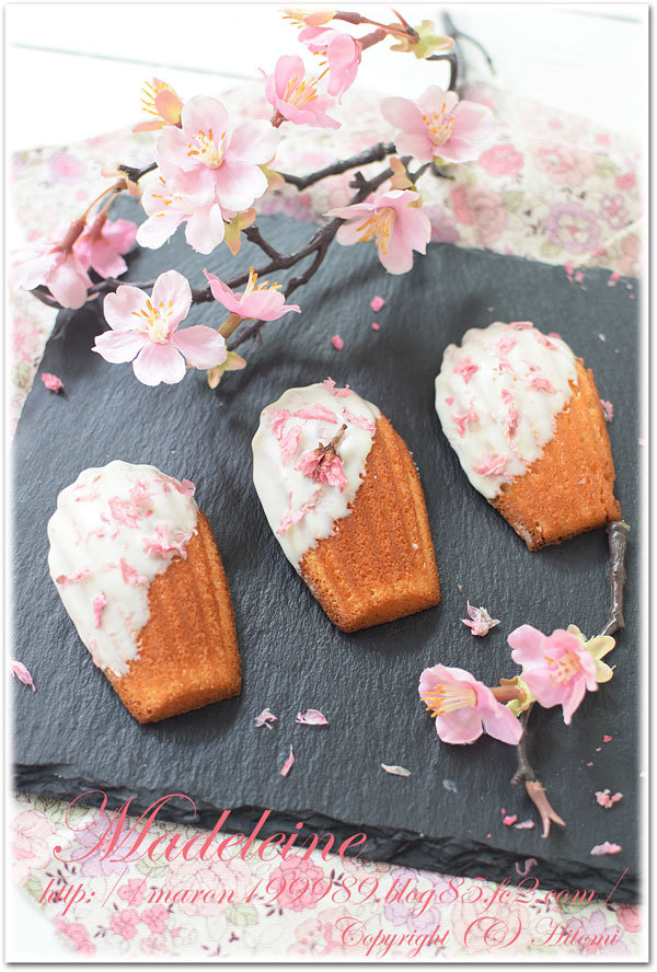 桜マドレーヌ