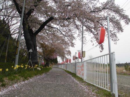 Corridor of Monday, April 23 cherry tree