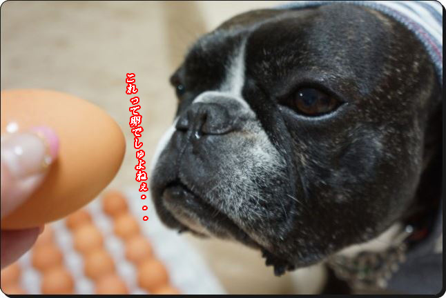これって卵よし