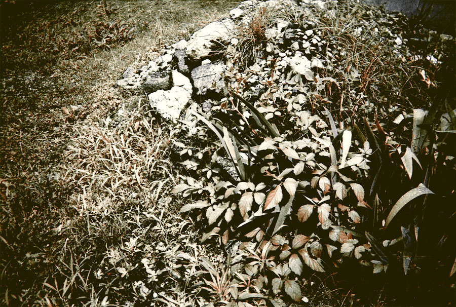 枯葉のオブジェ