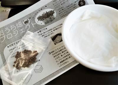 おうち畑 カイワレ01