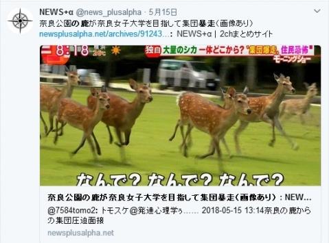 奈良鹿の大暴走
