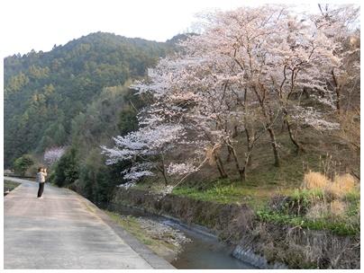 須崎 桜2