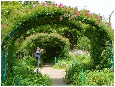 PaPaモネの庭5