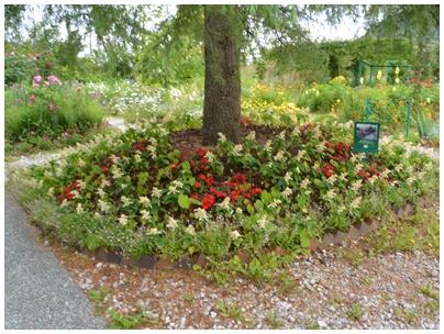 PaPaモネの庭16