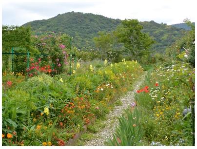 PaPaモネの庭17