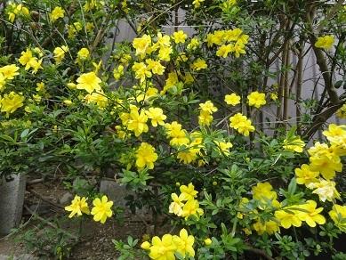 5月の花7