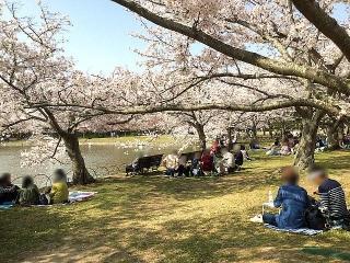 IMG_180402_1663 公園内湖畔の花見風景_VGA