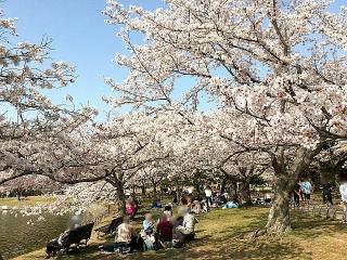 IMG_180402_1665 公園内湖畔の花見風景_VGA