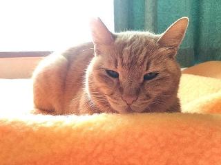 IMG_180412_1683 ベッドの上のトラ美ちゃん_VGA