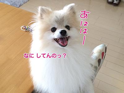 IMG_6435.jpg