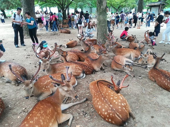 13 鹿が集まる