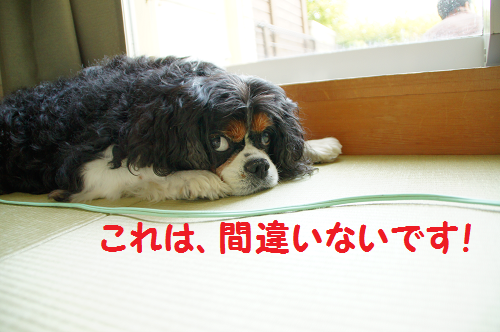 20150815163712901.png
