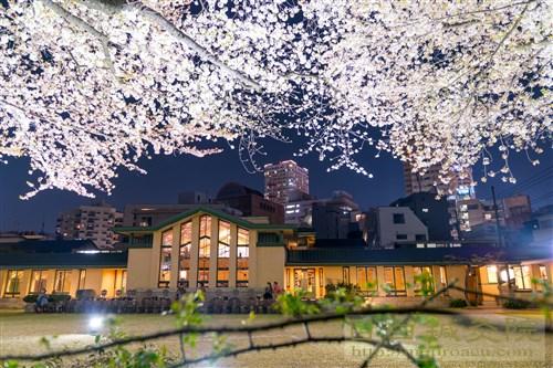 20180331池袋明日館夜桜5