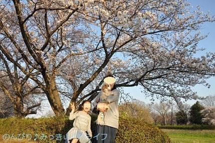 hanami20180301.jpg