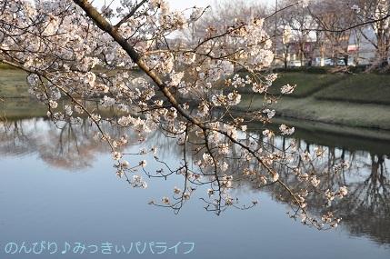 hanami20180302.jpg