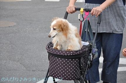 yakitori20180501.jpg