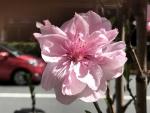 花18092