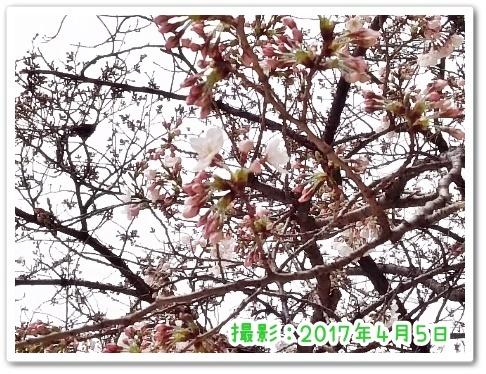 DSC_3408 (450x338)