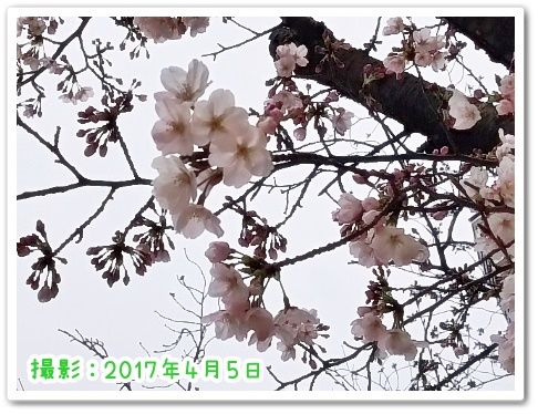 DSC_3400 (450x338)
