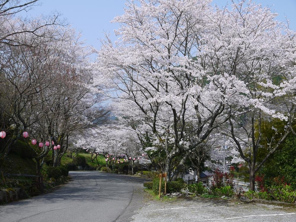 桜景色02(2018年3月30日)