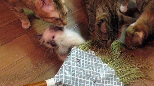 ホウキと子猫
