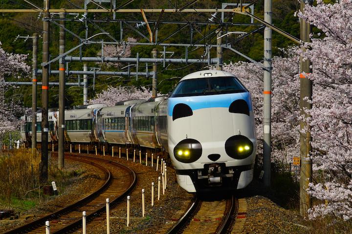 180330 JRW 287 panda yamanakadani sakura1