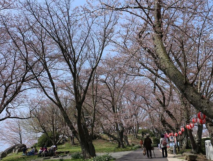 紫雲出山 染井吉野3分咲き 30 3 29