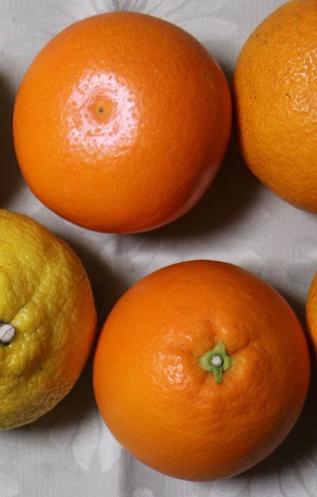 タロッコオレンジ 30 4 25