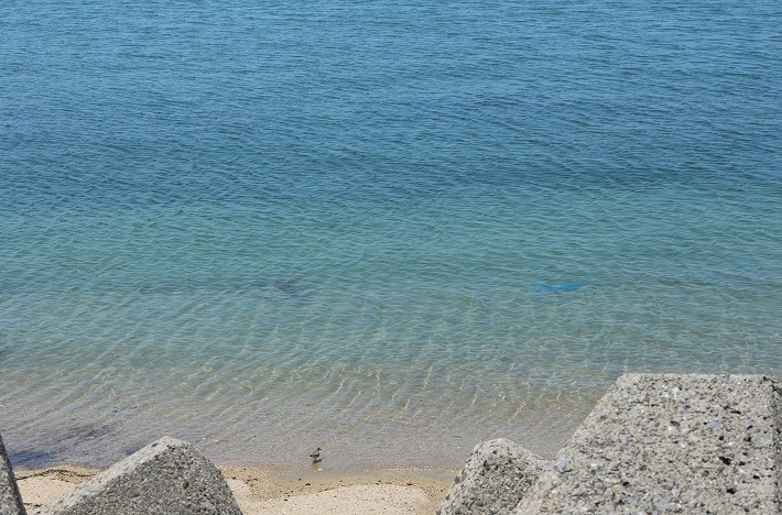 西浜海岸 30 5 21
