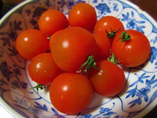 220ミニトマト(1)